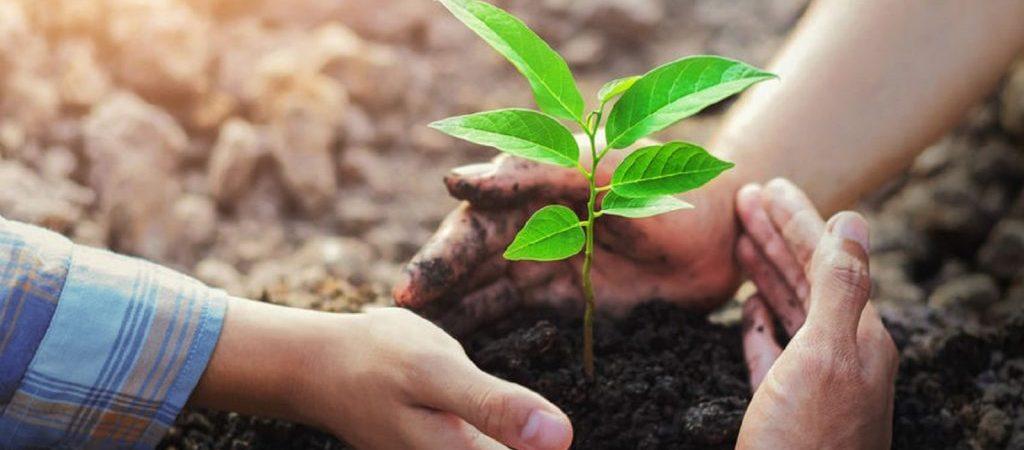 heilung pflanze 123rf 110833573 PAPAN SAENKUTRUEANG 1600px min 1024x468 1